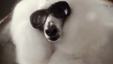 Roma Web Fest - DIESEL EYEWEAR – Dogs with Sunglasses by Jamie Brunskill